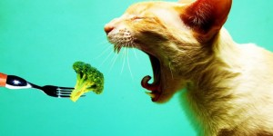 bigpreview_Vegetarian_Cat-640x320